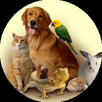pet category menu